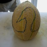 cigno di melone parte 2